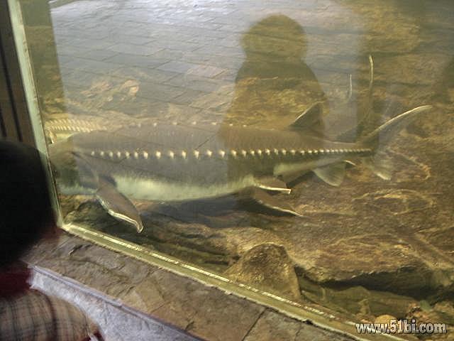 陪儿子游玩上海动物园