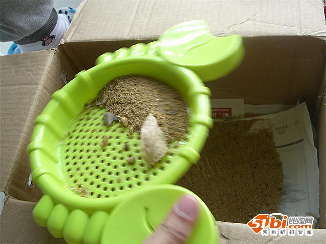 龟做沙屋,准备冬眠