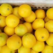 【需用券】重庆万州黄柠檬共8斤