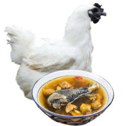 戴姆勒斯 乌骨鸡  土鸡肉1年 新鲜现杀整鸡1只