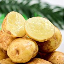 承德围场牧场小土豆5斤