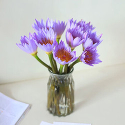 鲜花花束 紫色睡莲 10枝装【已结束】
