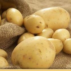 青汉羊 新鲜土豆 10斤
