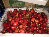 1号店+村姐 预售山东烟台樱桃 3斤装 国产车厘子 果径22-26mm