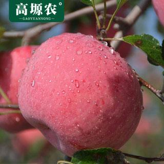 陕西红富士现摘苹果5斤