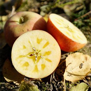 阿克苏冰糖心苹果10斤