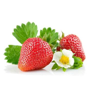 中卉草莓种子500粒+肥