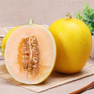 当季甜瓜黄河蜜瓜7.5-8斤