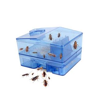 蟑螂捕捉全窝端强力灭蟑