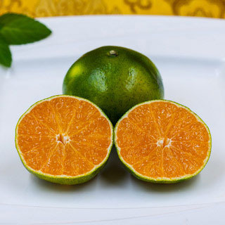 宜昌蜜桔绿皮5斤