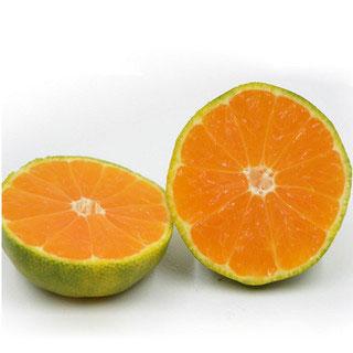 宜昌长阳蜜桔5斤
