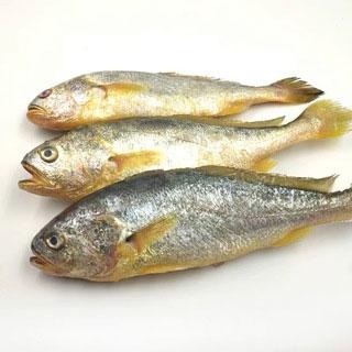 顺丰新鲜野生黄鱼5斤