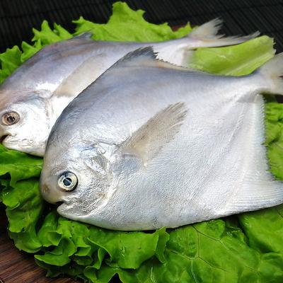 海捕野生銀鯧魚6-7條