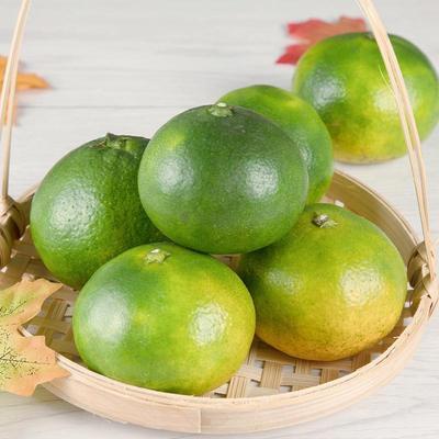 皇帝柑广西新鲜水果5斤