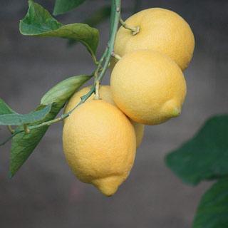 四川安岳黄柠檬2斤