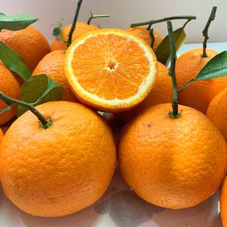第2份0.1元丑橘10斤大果