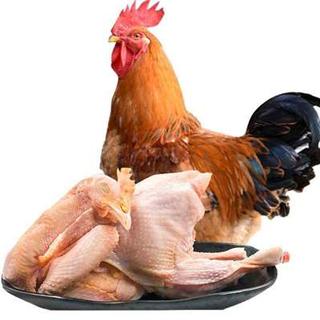 買一送一散養公雞4斤
