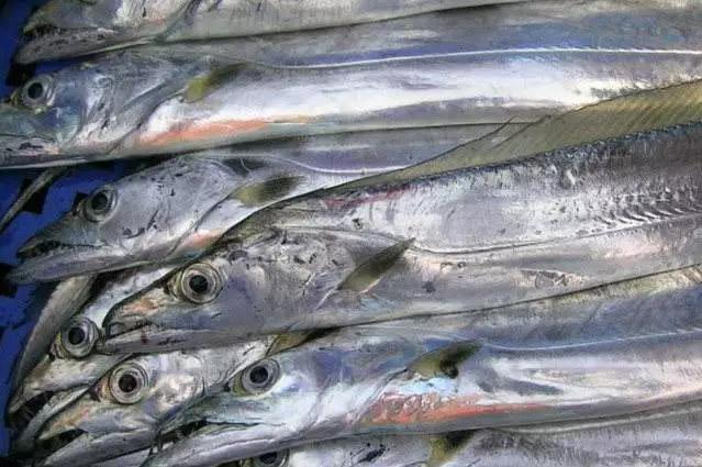 2018进口冷冻带鱼数据!舟山带鱼那么好吃,为什么还要进口?